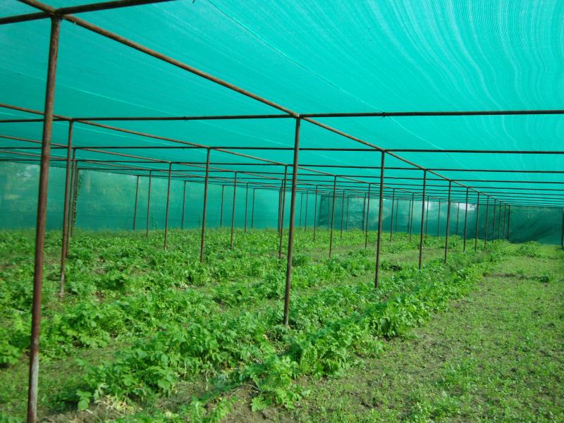 Manufacturer Of Knitted Fabric Agro Shed Net Accura